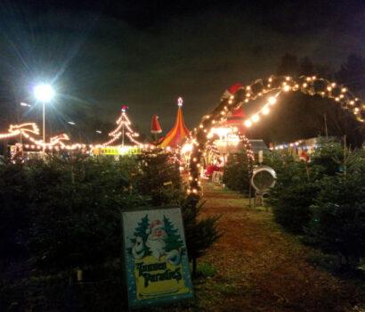 Tannen-Paradies Verkaufsplatz Lichtenrade bei Nacht beleuchtet